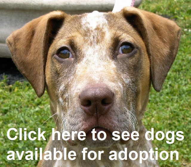 Image of: Puppy Dogs Cats Petfinder Cumberland Valley Animal Shelter